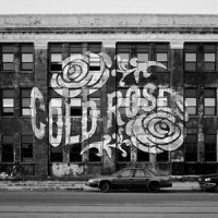 Cold Roses - No Silence In The City