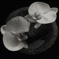 Mike Patton & Jean Claude Vannier - Corpse Flower