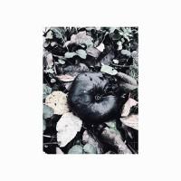 Black Phoebe - Black Phoebe