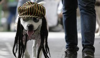 Τα σκυλιά αγαπούν τη reggae…