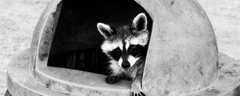 Rocking Raccoon - Otherside